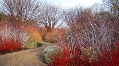 The gardens at Anglesey Abbey are designed to be colourful and fragrant throughout the year.