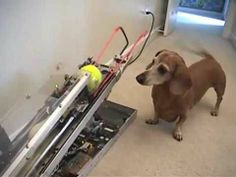 What happens when engineers own dogs a video worth watching