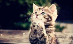 Pray Pray Everyday Just Pray