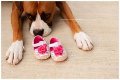 Maternity photos with pet, dog and baby shoes http://blog.chrystalstringerphotography.com/?m=1