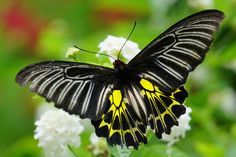 Top 10 Beautiful Butterflies   The Top Ten Most Beautiful Butterflies In The World - YouTube
