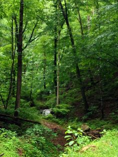 In West Virginia on the Hatfield McCoy Trail System