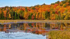Autumn Days: Spectacular Fall Colours on display just off of the Highway outside Algonquin Park. Algonquin HighlandsLandscapeFallColorsForestCanadaWaterAutumnLandscapesRedLakeColoursBeautifulOrangeOntarioNorth AmericaPondReflectionMirrorSeasonPrettyLovelyHarvestSeasonsGorgeousAlgonquin ParkStunningMirroredFall ColoursFall ColorsBodies Of WaterRavishing