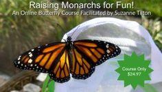Learn How to Raise Monarch Butterflies