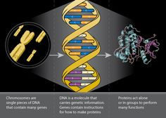 Complexity of translating a gene to a protein