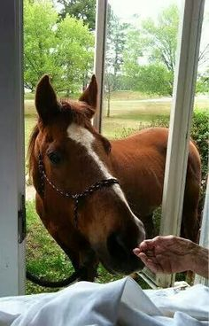 Beauty. I can only hope & pray this will be me someday. To live this long & still know the touch of a horse's muzzle...♡ Lord, may it be so...   JJA