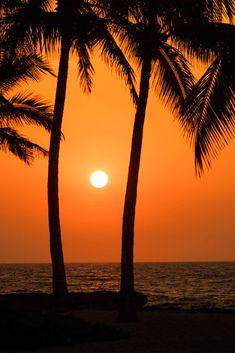 aidan Workout Plans workout beginner tips Surrealism Photography, Nature Photography, Hawaiian Background, Nature Pictures, Cool Pictures, Beach Sunset Painting, Very Nice Images, Hawaiian Sunset, Palm Trees Beach