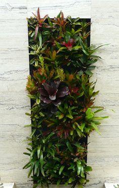 Vertical gardens & greenwalls - GardenDrum