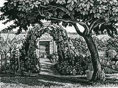 Howard Phipps  The Medlar Tree   wood engraving