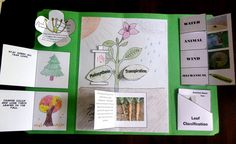 A lapbook about the parts of plants, types of trees, seed dispersion and leaf classification! Plant Science, Science And Nature, Science Projects, School Projects, Interactive Board, Photosynthesis, Plant Needs, Memory Books, Learning Centers