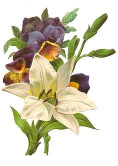 free vintage floral clipart