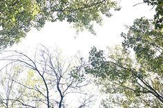 Bomen 1