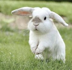 Bunnies were born to bounce freely!!!