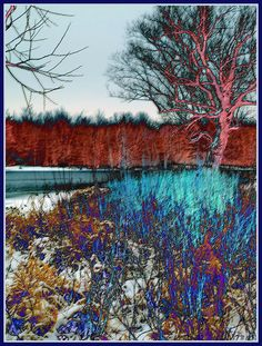 Winter River Tree: Red and Blue by Tim Noonan.