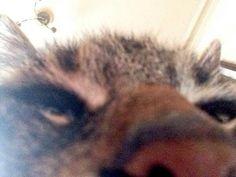 My boys #26! The Ultimate Super-Mega-Mondo Pet Selfie Compendium