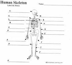 449ea7be98ba021fba86ef2891ccf3ab unlabeled human skeleton diagram human anatomy organs pinterest
