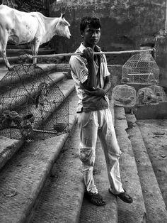 Bird seller, India