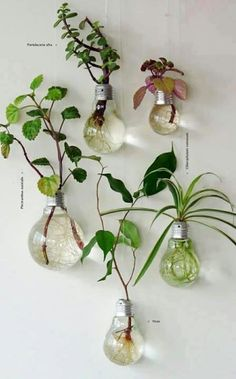 Recycled light bulbs for a hanging garden
