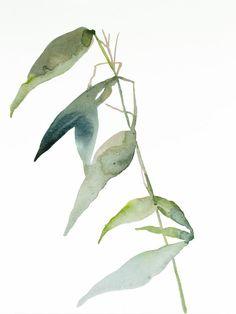 Grass Study Watercolour by Elizabeth Becker Watercolor Plants, Watercolor Animals, Abstract Watercolor, Watercolor Paintings, Original Paintings, Watercolor Ideas, Abstract Art, Bay Leaf Plant, Watercolour Tutorials