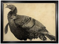 Bronze Turkey I / Meleagris gallopavo / 50 x 70 cm / Pencil on panel Bronze Turkey, Animal Sketches, Pencil Drawings, Birds, Illustration, Painting, Animals, Composition, Sketches Of Animals