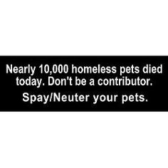Spay/Neuter your pets and never buy from breeders. Put an end to homeless pets.