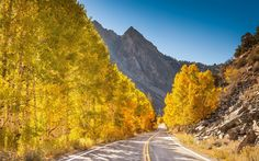 Download wallpapers autumn mountain landscape, road, forest, yellow tree, mountains