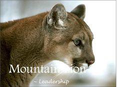 Mountain Lion - Leadership