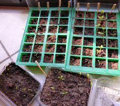 Semer les graines KOKOPELLI - Le Défi Potager #7 : l'accélération ! Une Semaine à Paris Foret.