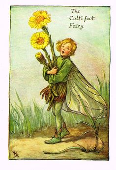 """Cicely Barker's Fairy Print - """"THE COLT'S FOOT FAIRY"""" - Children's Lithogrpah - c1935"""