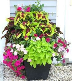 Container Gardening Ideas 50 Beautiful Container Garden Flowers Ideas 32 - Container gardens are one of the fastest growing segments of gardening. Containers can be grown where traditional gardens are not possible including apartment balconies, small . Container Flowers, Flower Planters, Container Plants, Container Gardening, Flower Pots, Flower Ideas, Clay Flowers, Planter Pots, Outdoor Plants