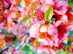 las flores son los mas hermoso de la naturaleza