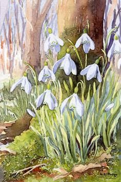 Dorothy Pavey - watercolours of countryside and garden. Limited edtion art prints by watercolour artist.