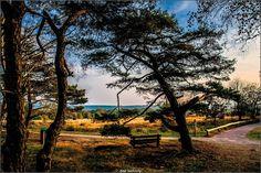 Sallandse heuvelrug - herfst