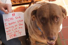 Dog Shame | Mom said that if I didn't stop barking that I...
