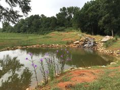 instead of an in ground swimming pool this guy built his own natural swim pond 22 Forget an In Ground Swimming Pool, this Guy Built His Own Natural Swim Pond!