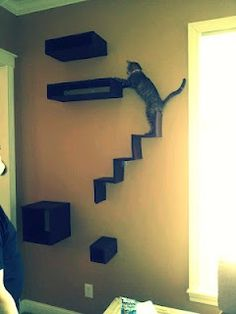 Cat wall!  I made the shelves and stairs myself.  Spoiled princess kitty!