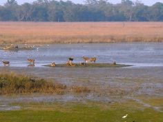 Kishanpur Wildlife Sanctuary - in Uttar Pradesh