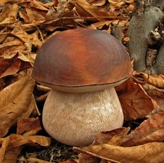 Fine Art Porcini King Bolete Cepe de Bordeaux by tanjasova