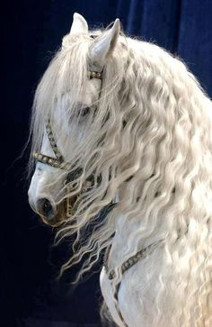 Stunning! Reminds me of a horse I once knew. He looked exactly like this one and had a regal personality to match his stunning looks