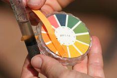 Jardinage : comment mesurer le pH du sol de façon naturelle