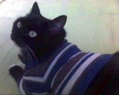Свитер реглан для кота