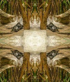 iguana abstract