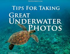 Tips for Taking Great Underwater Photos! http://www.prideofmaui.com/blog/maui/tips-for-taking-great-underwater-photos.html