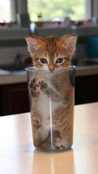 Glass o' cat.