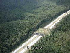 Figure 2.1.1. Wildlife overpass (known as the Wolverine Overpass) across the Trans Canada Highway, in Banff National Park, Alberta, Canada. Picture taken approximately 2000, three years after passages were installed. As time progresses, the vegetation on the overpass will grow to resemble the nearby forest. Passage is 50 m wide, 70 m long.