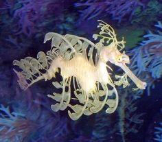These are so beautiful and graceful. We saw them at a special exhibit they had at the Florida Aquarium in St Petersburg, fl.