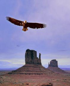 I saw an eagle flying (I miss my Eagle friend)