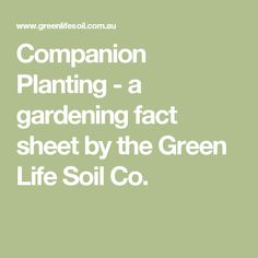 Companion Planting - a gardening fact sheet by the Green Life Soil Co.