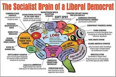 brain - - Yahoo Image Search Results
