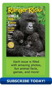 June-July 2013 issue of Ranger Rick Magazine - featuring a story about baby gorilla twins